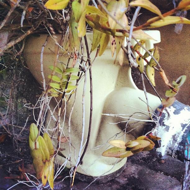 Toilet pot  (Taken with  Instagram )