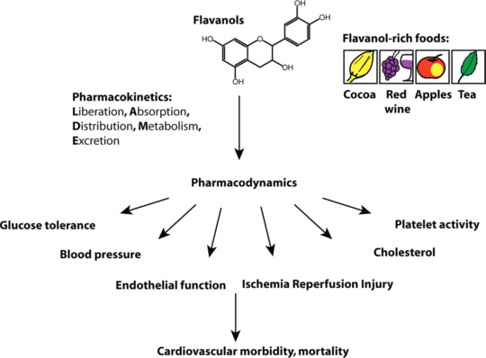 A chart published in the European Heart Journal (2010) showing the functions of flavanols.