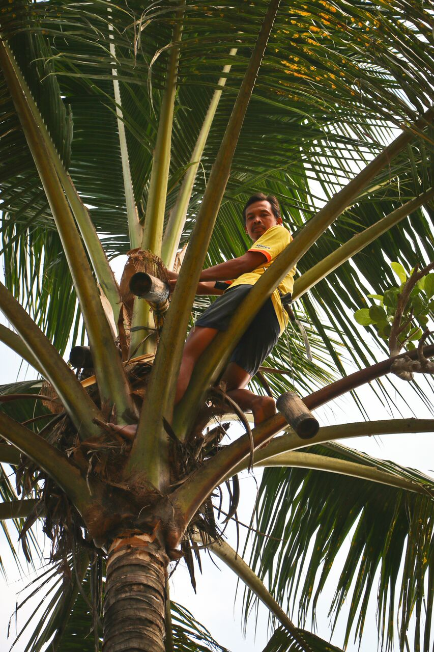 CoconutSugar-farmer3.jpg