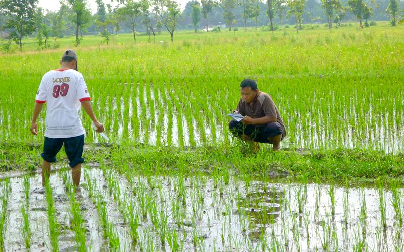 Rice-gallery-14.jpg