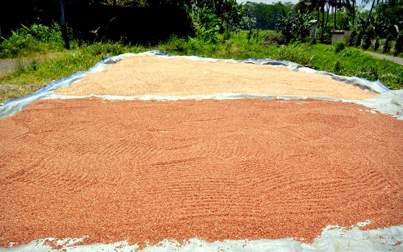 Rice-gallery-17.jpg