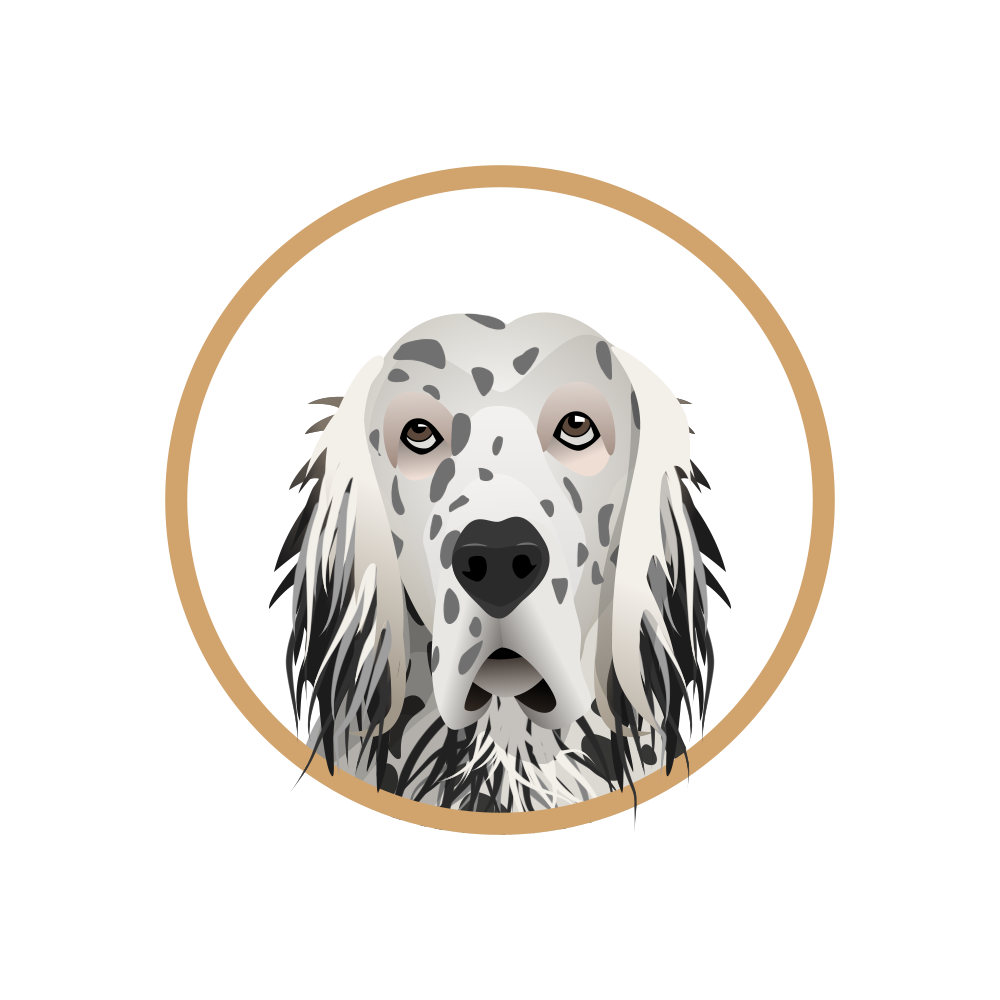 English Setter (0;00;17;01).png