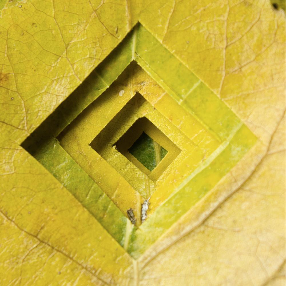 leaf-cut.jpg