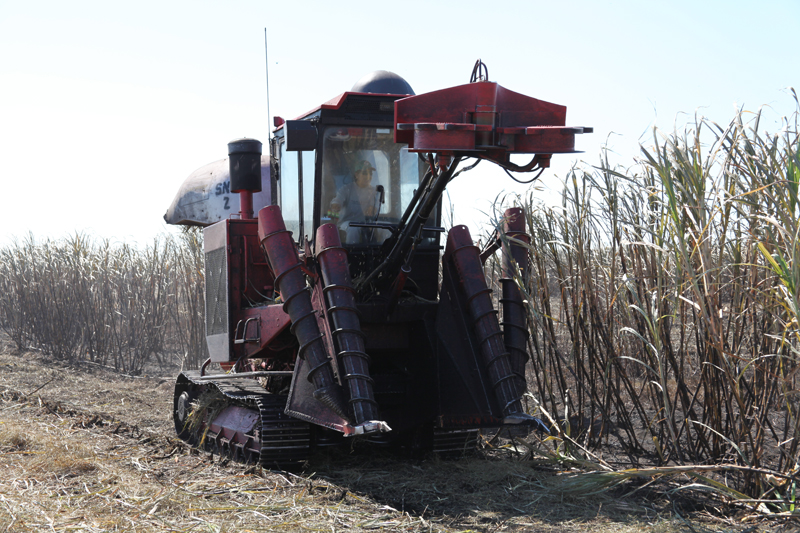 The Big Sugar Tour: : Sugar Cane Harvesting