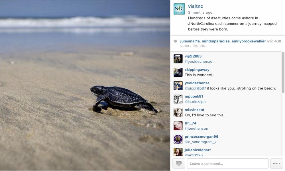 VISITNC_IG_turtle.png