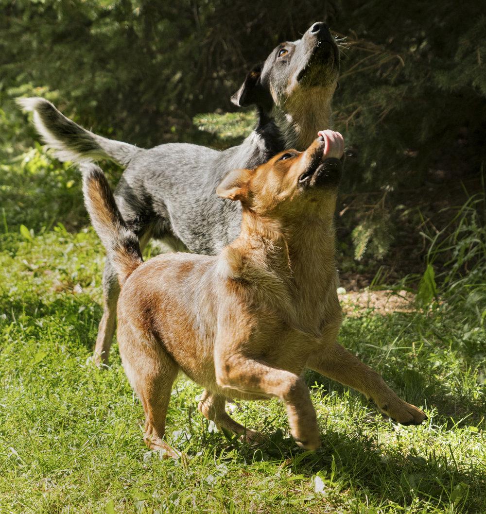 Dogs2_160817.jpg