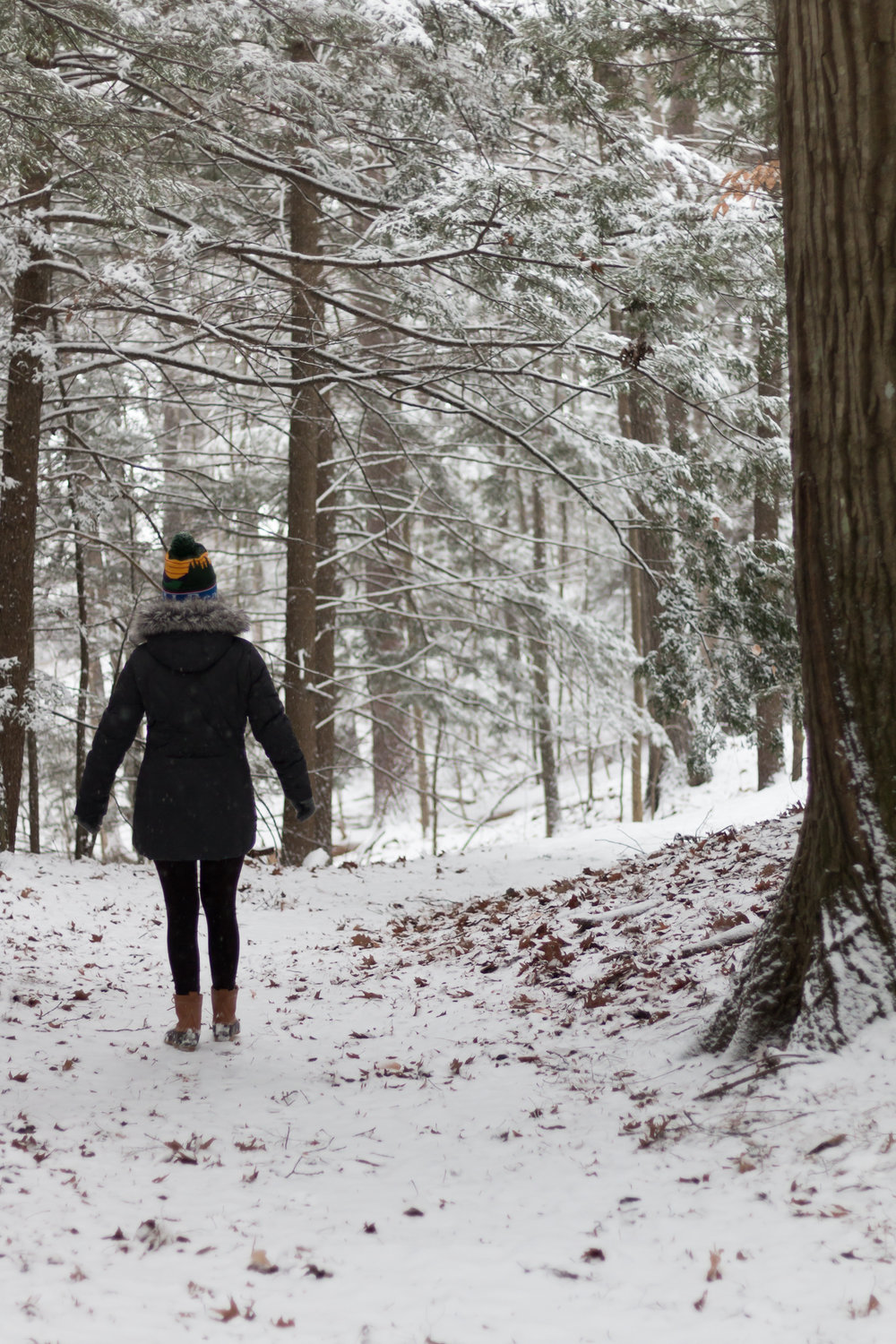 Wintery Walk Through Vaughan Woods State Park, Maine | Sea of Atlas