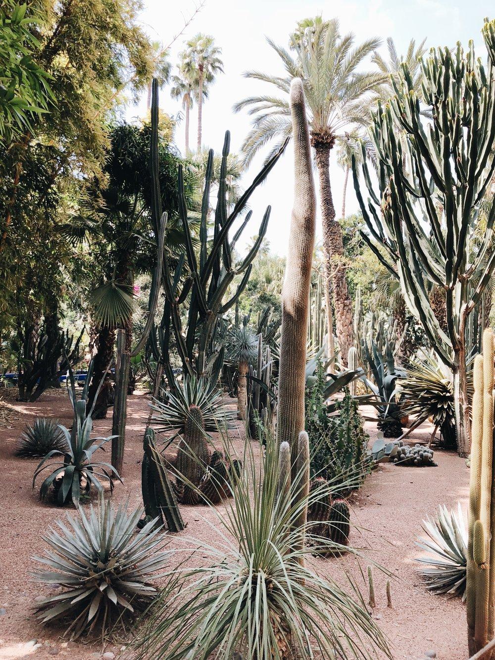 Jardin Majorelle | Marrakech, Morocco | Ciao Fabello
