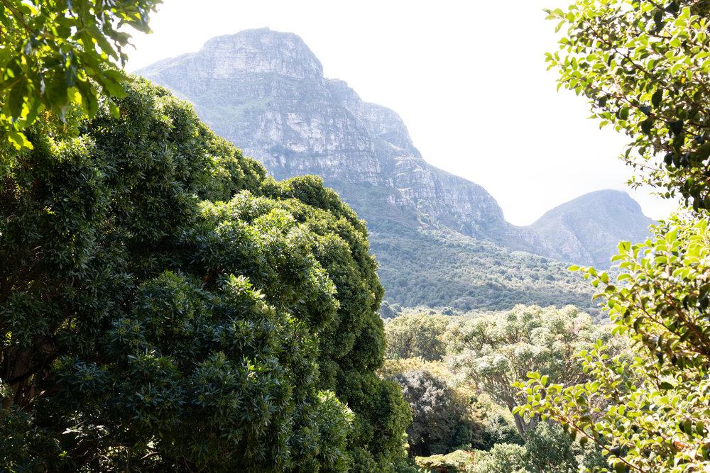 Kirstenbosch National Botanical Garden | Cape Town, South Africa | Ciao Fabello
