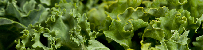 Dark leafy greens like Kale are great for your skin and body!