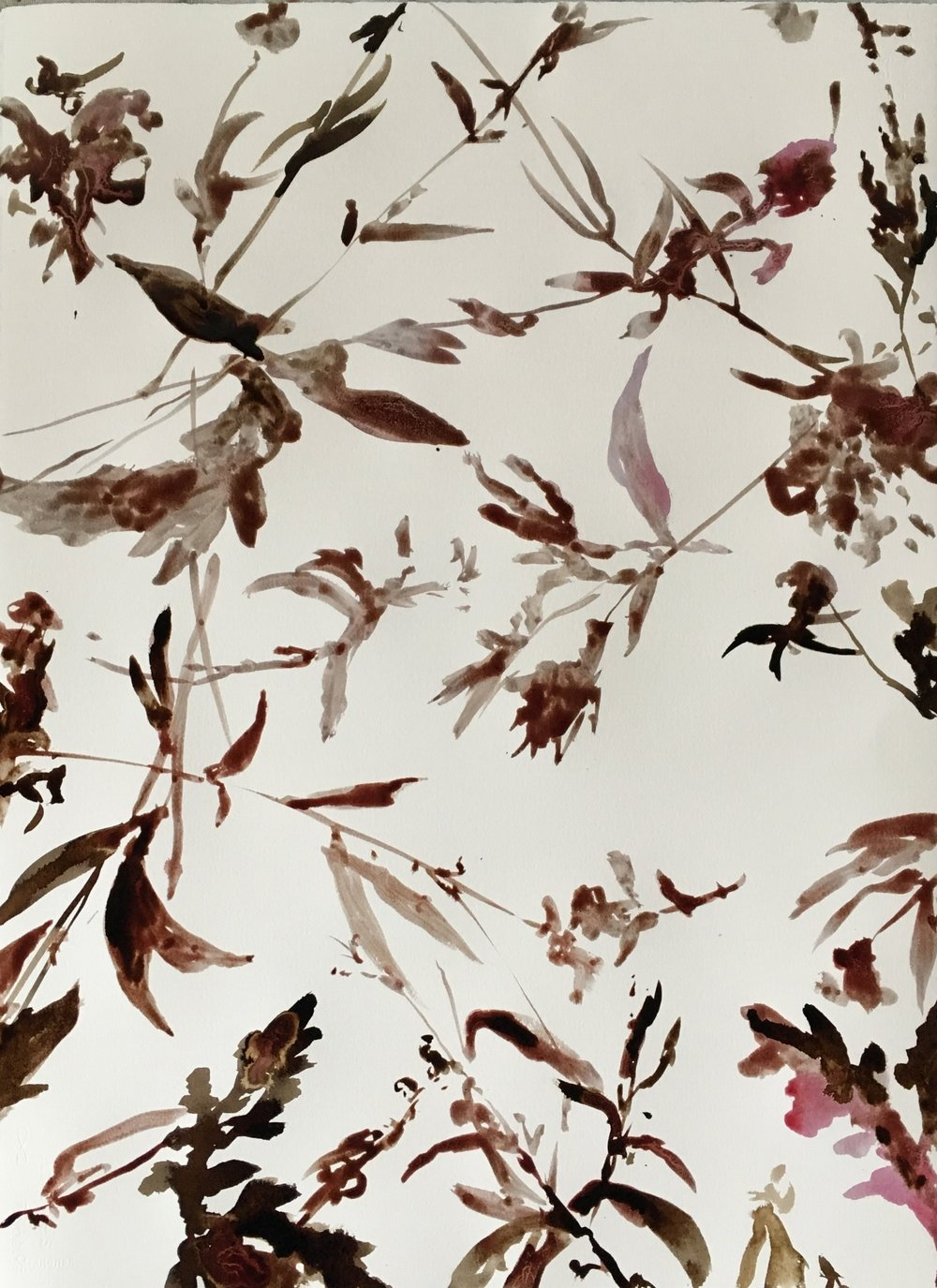 hibiscus and black walnut ink on paper / 22in x 30in / 2018