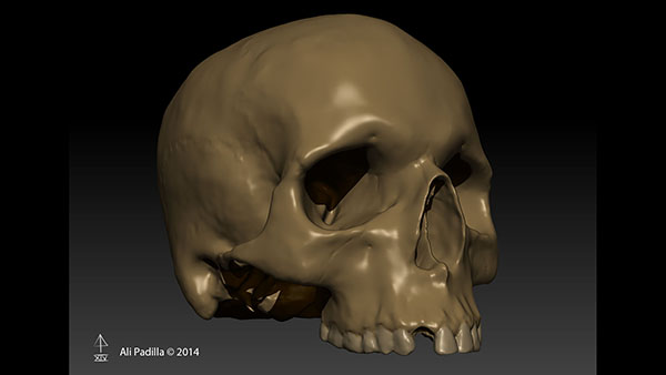 Completed skull model in ZBrush