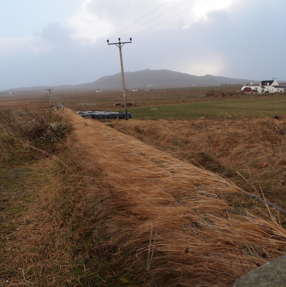 Relentless wind picking up last summers grass and weaving it into the fences