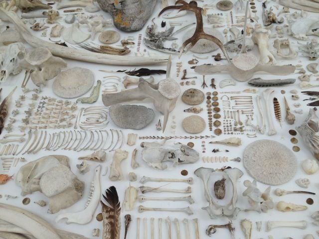 Detail from Sophie Morrish : Biomass an array of objects collected on North Uist