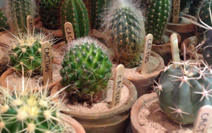 cacti-700x441.jpg