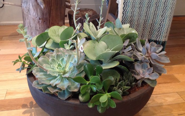 succulentplanter-700x441.jpg