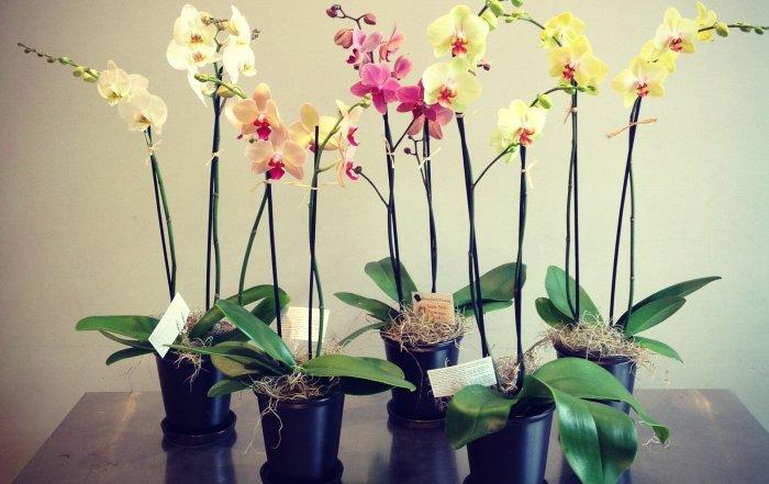 orchids-700x441.jpg