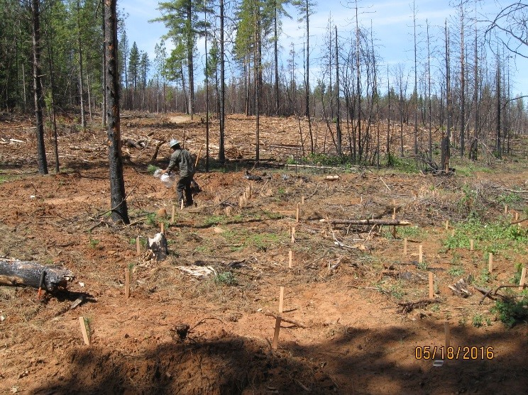 Seedlings and Staked Row Survival Plots - Lumpkin Fire.jpg