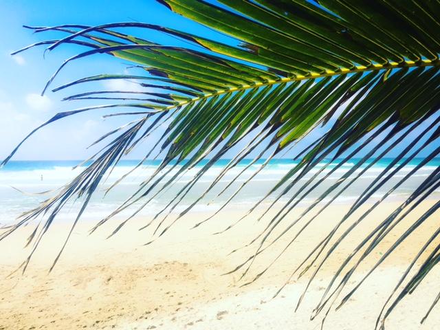 julzvonsylt_srilanka_palmtree
