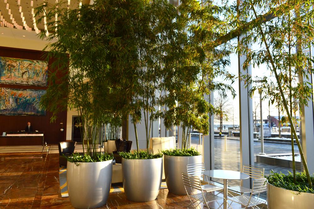 Harding Botanicals bamboo