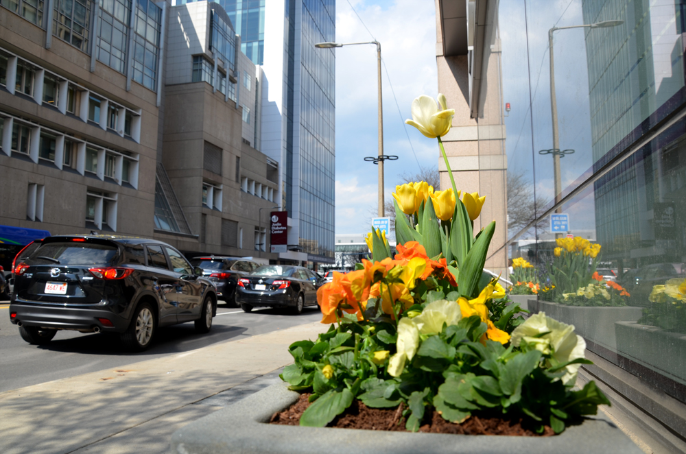 Spring Container Garden. Exterior Design. Harding Botanicals. Dana Farber