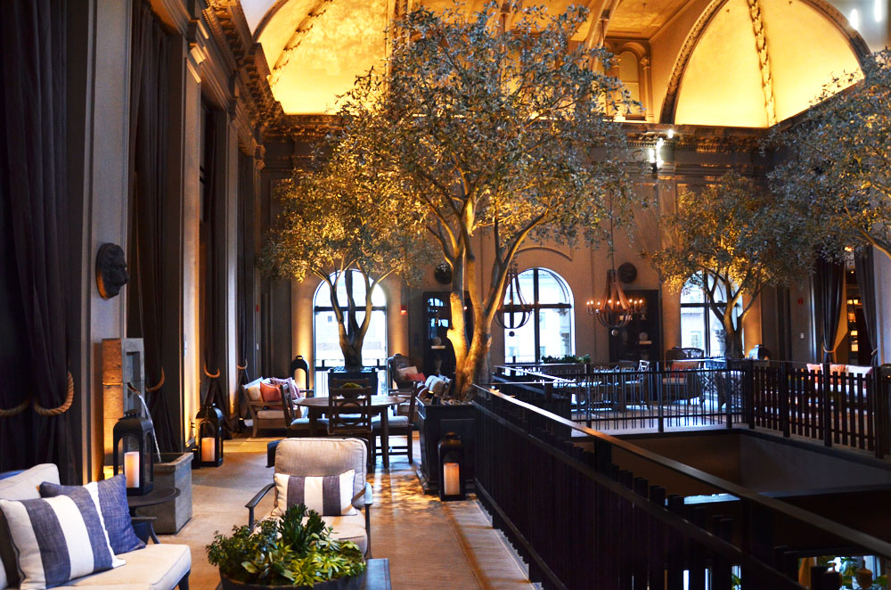 Black Olive Tree. Harding Botanicals. Restoration Hardware. Boston