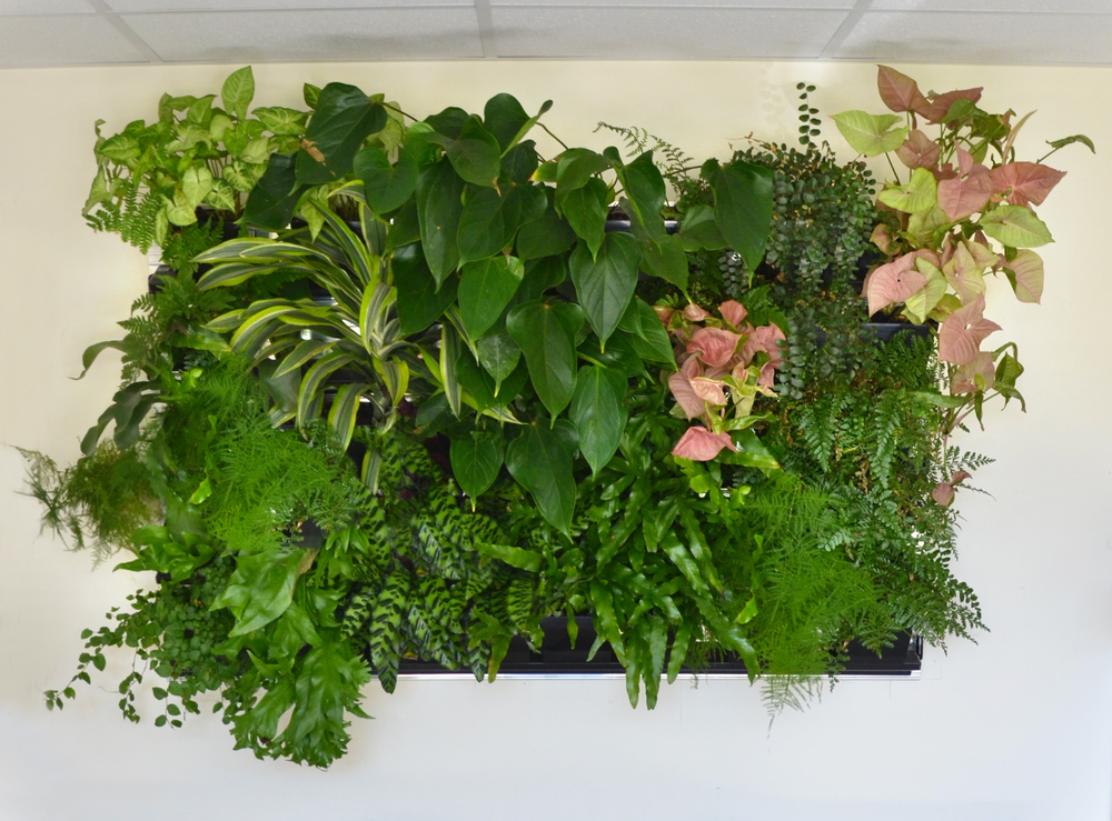 Harding Botanicals-living green wall-interior plants