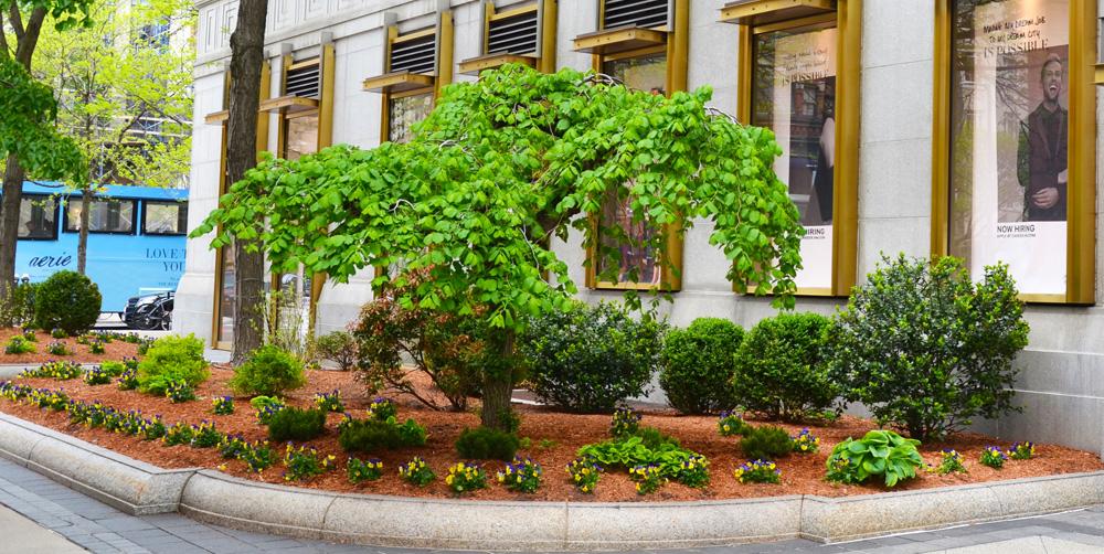 Charming Harding+Botanicals_Exterior