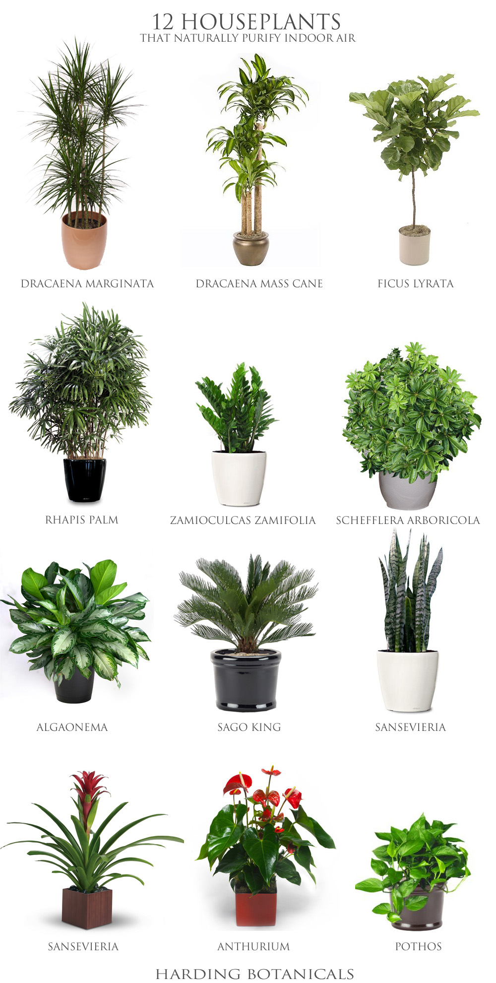 Harding Botanicals_12 house plants.jpg