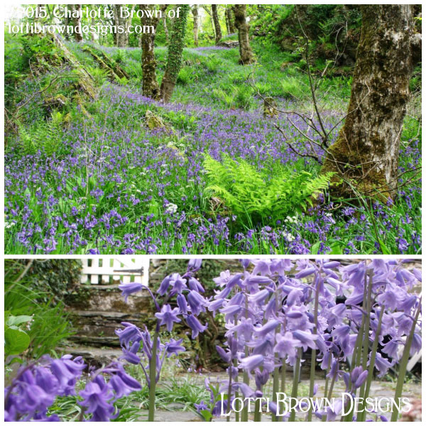 A walk through a bluebell wood can't fail to gladden the heart and inspire the senses - magical!