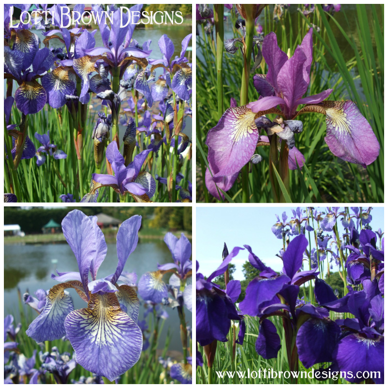 Waterside Irises
