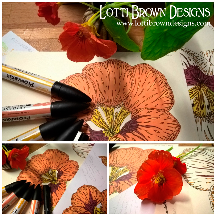 Drawing pretty, orange nasturtium flowers