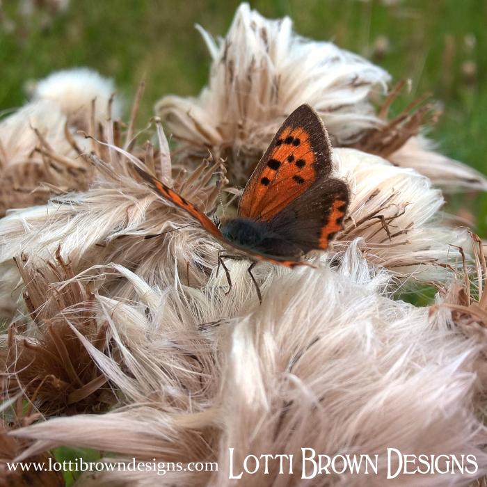 Yorkshire's butterflies
