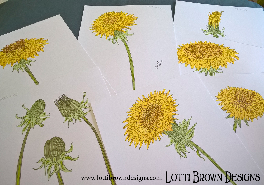 Dandelion drawings for my artwork Dandelion Dawn