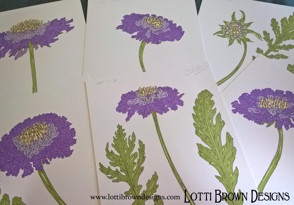 Pretty purple scabious flowers, drawings