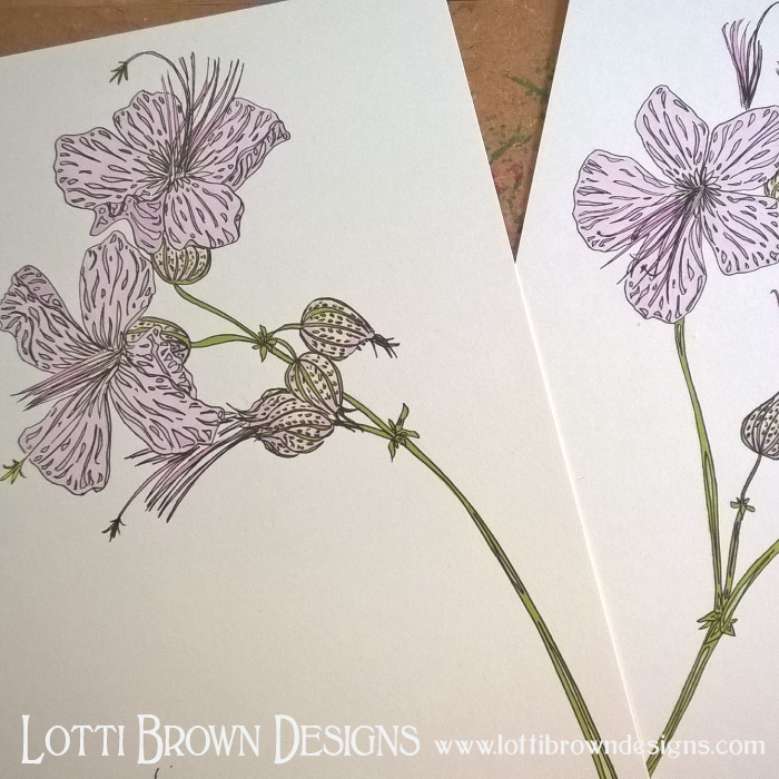Pale pink geranium drawings