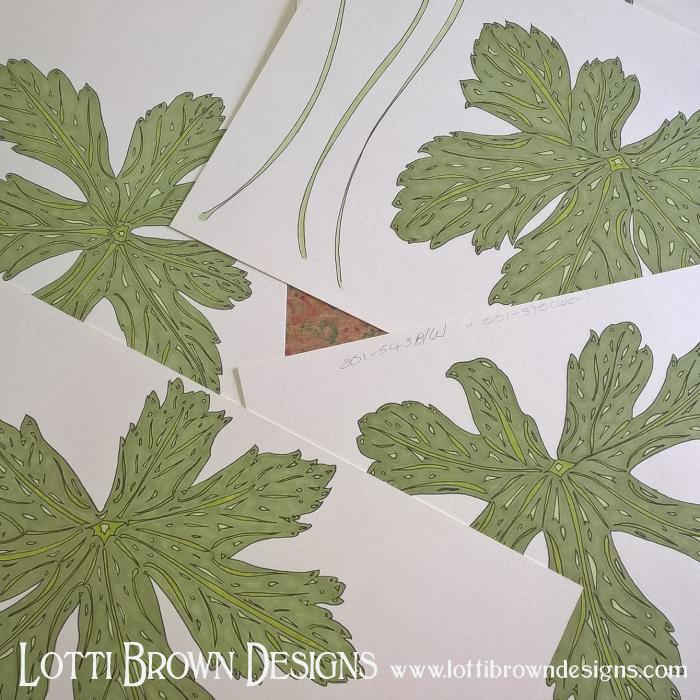 Hardy geranium leaves drawings