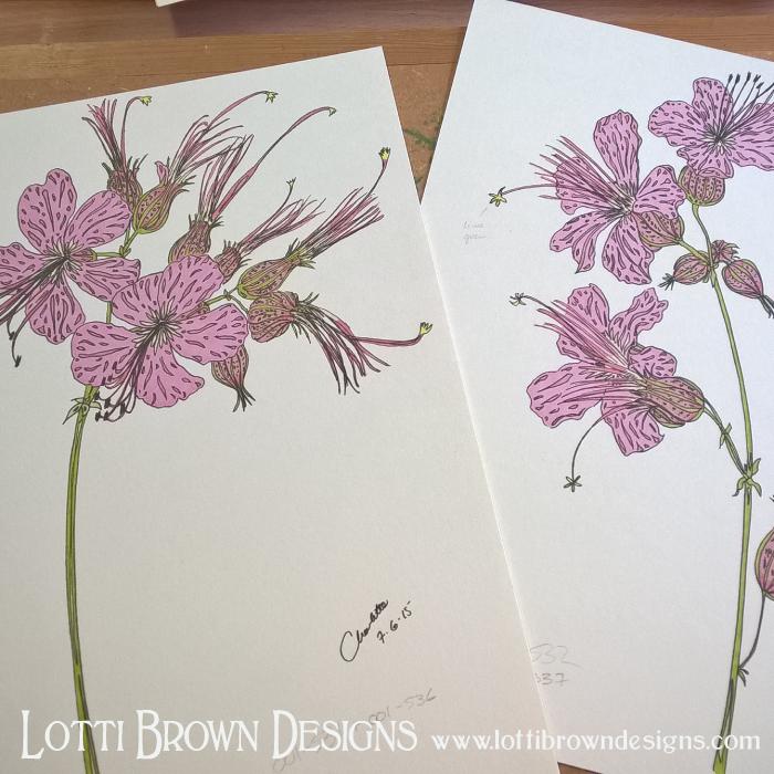 Pink Geraniums Drawings