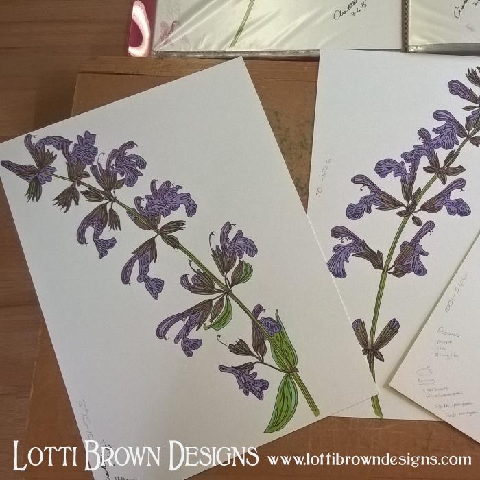 Purple salvia flower drawings