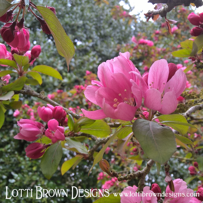 Pretty pink apple blossom is a sure sign the natural world is springing into life