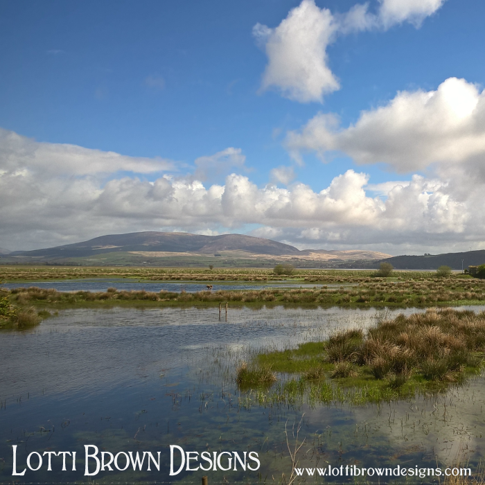 Watching for herons in the Wigtownshire wetlands