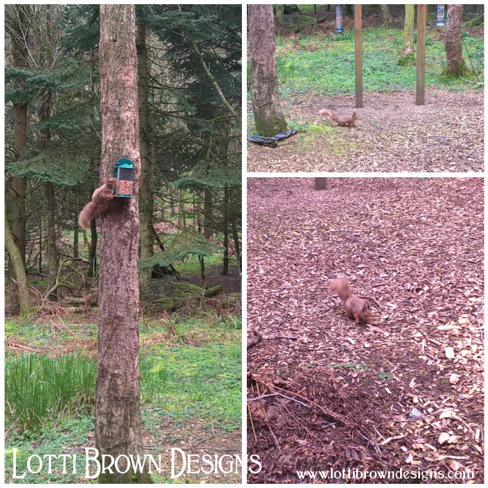 Exciting to spot red squirrels from the wildlife hide in the Galloway Forest