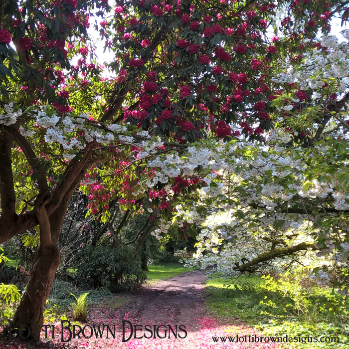Snow white and rose red - beautiful gardens in Galloway