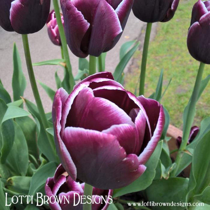 Purple tulips for a regal nature, wealth and prosperity