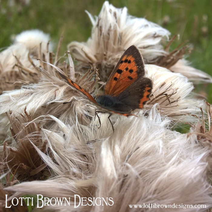 Butterfly on a thistle seed-head
