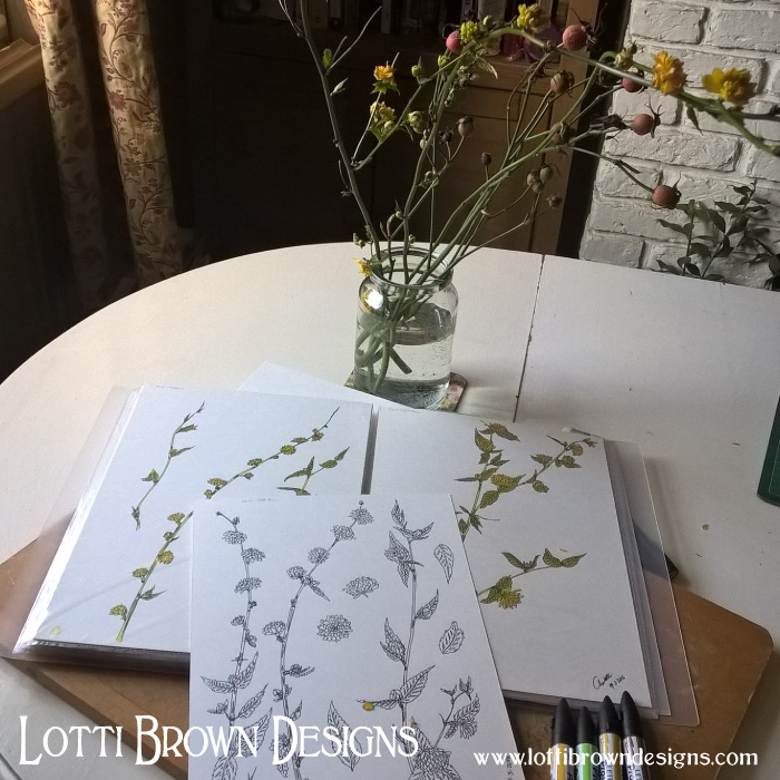 Drawing flowers and foliage from the garden