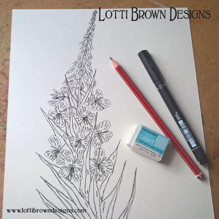 My Rosebay willowherb drawing: black fine-liner