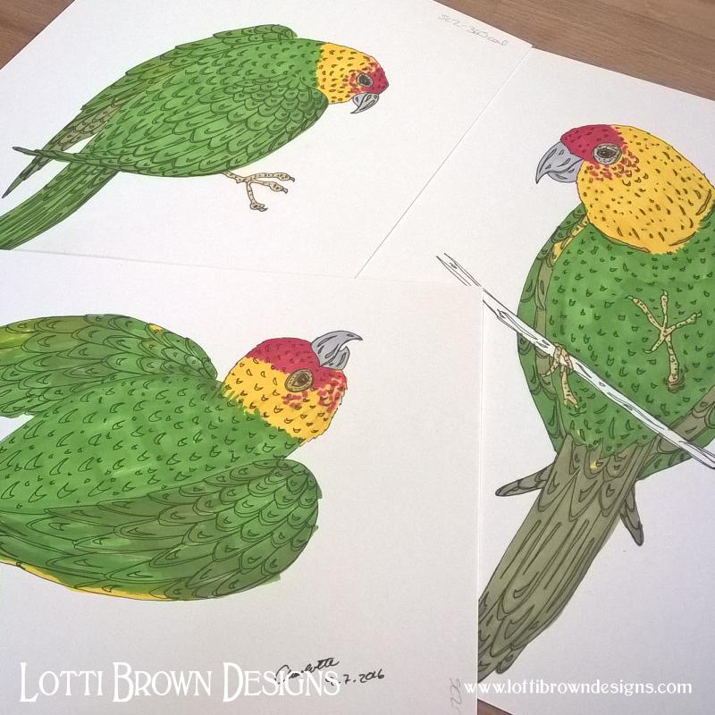 Parakeet drawings
