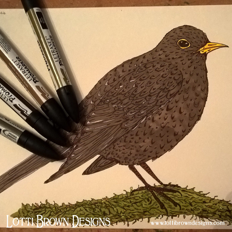 My blackbird drawing in pen and ink