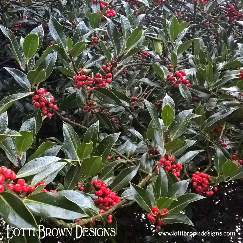 Traditional Christmas greenery: holly